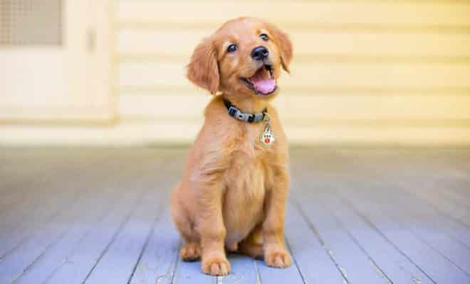 Dog ID Tags & Collar Accessories